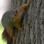 Squirrel Removal Methods – 5 Tips