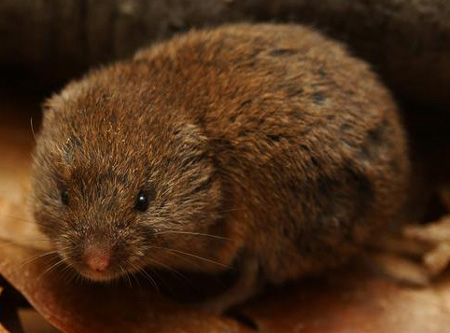 how to get rid of ground moles poison