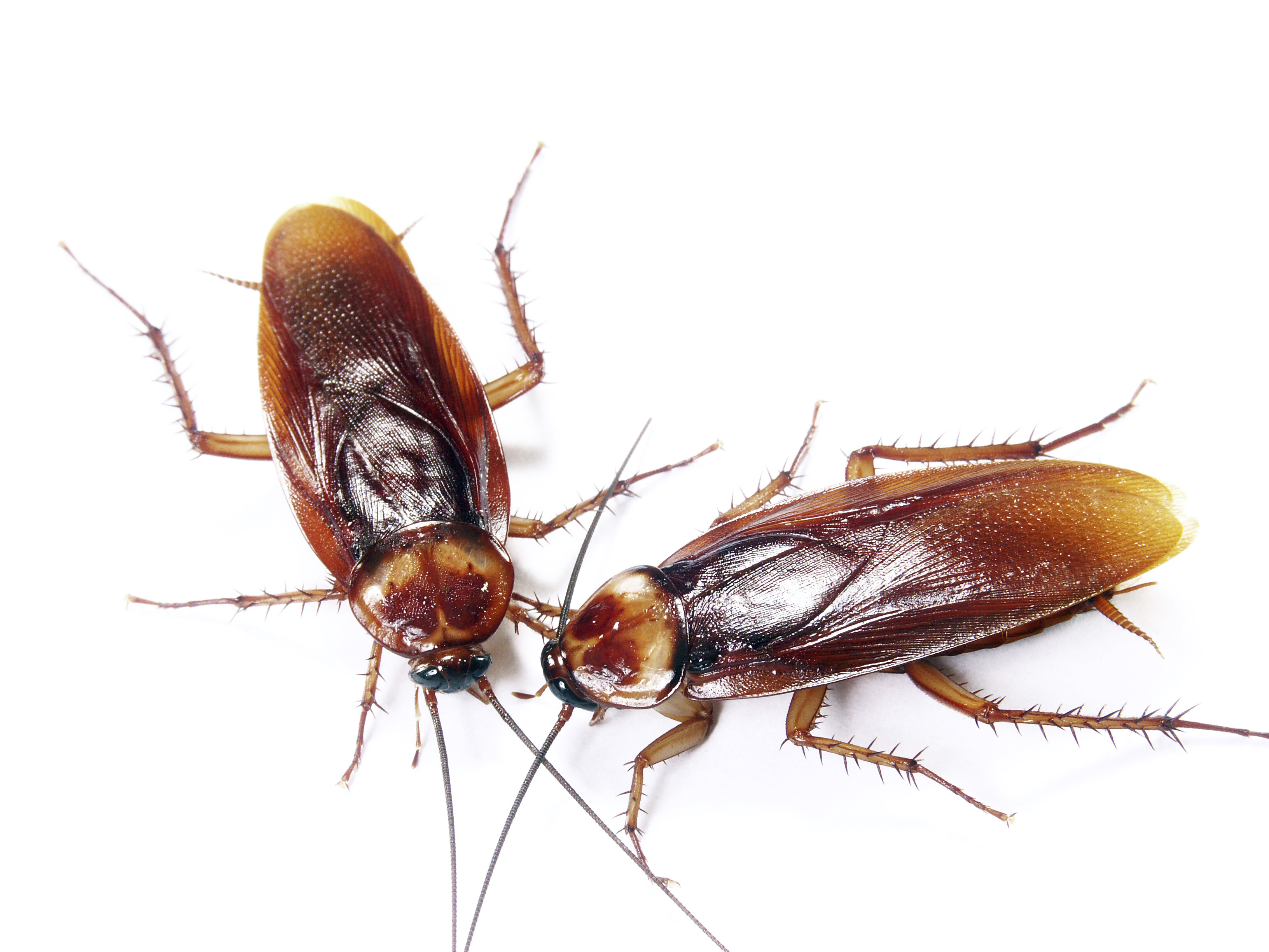 Blog - Minneapolis Pest and Critter Control - Laughlin\'s