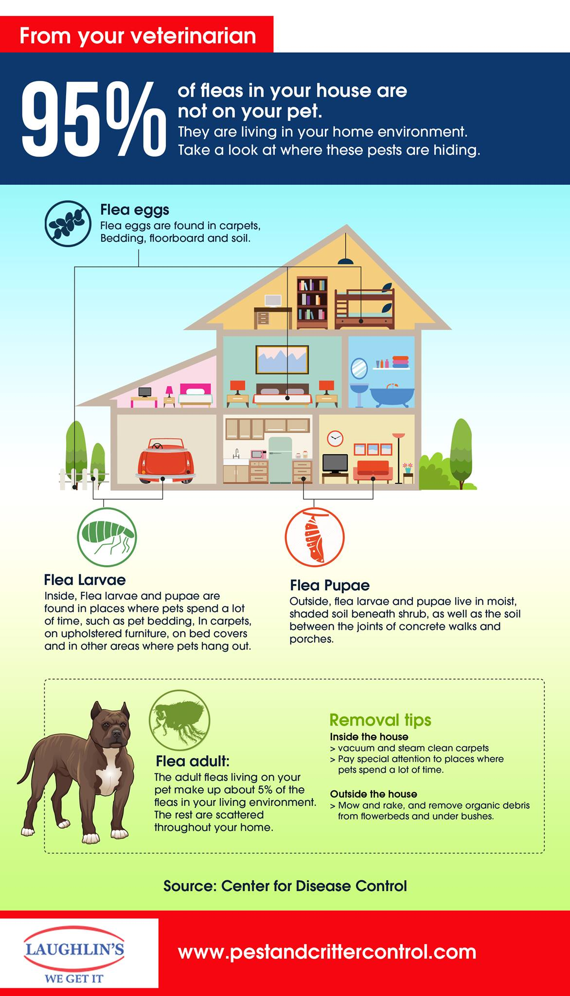 7 ways to get rid of fleas and ticks on your minnesota property in 7 ways to get rid of fleas and ticks on your minnesota property in 2017 ccuart Image collections