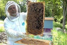 beekepper and honeybee hive
