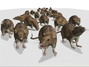 Getting rid of Mice - Pest Control