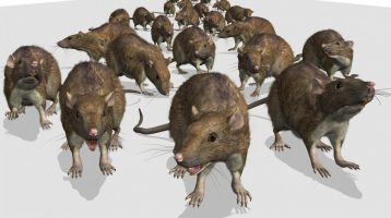 Getting Rid of Minnesota Mice in 2017? 14 things you need to know.